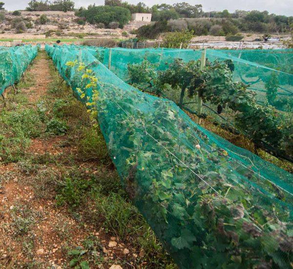 Things to do in Malta   Diar il-Bniet