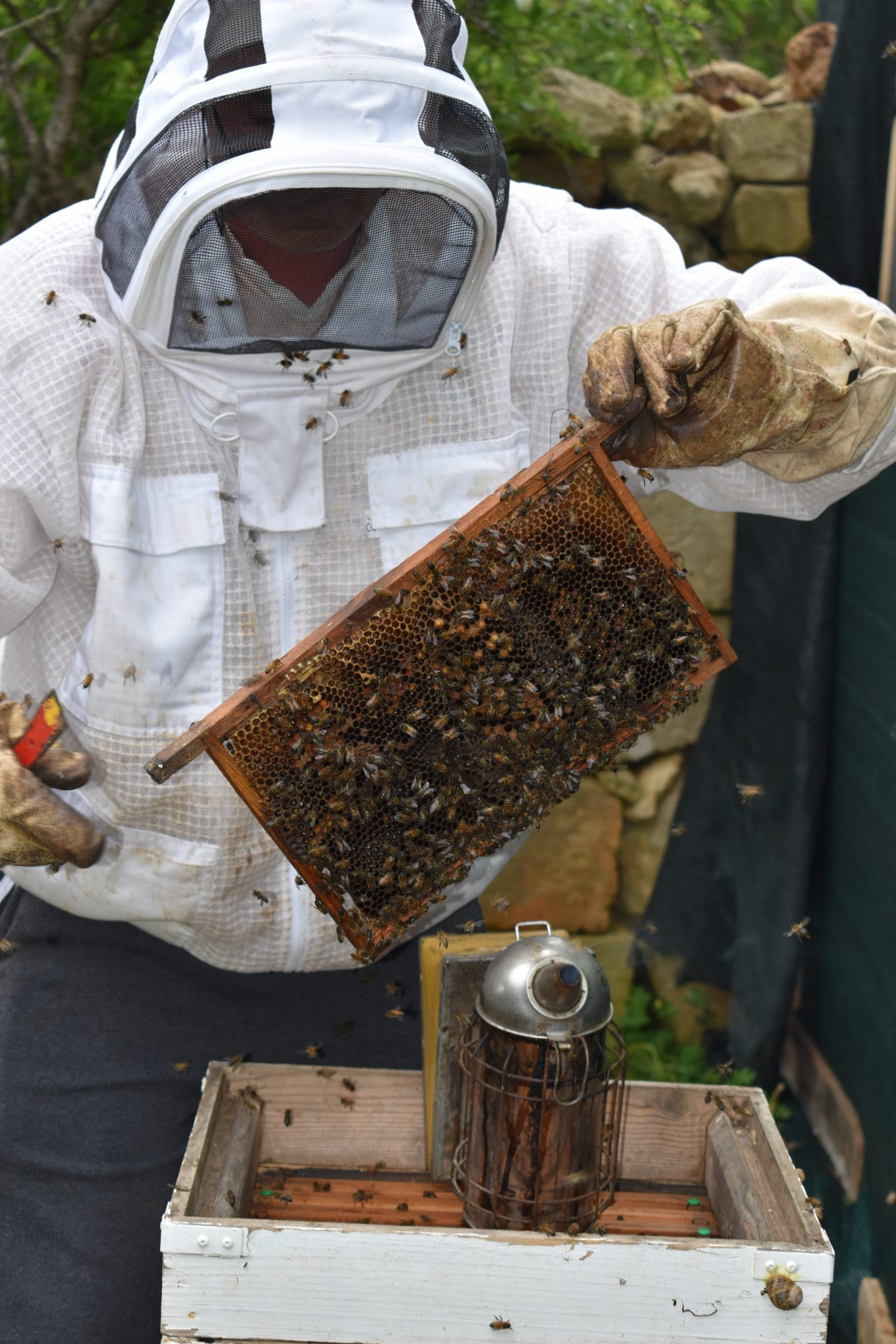 Bee Keeping Workshop - 11th. May